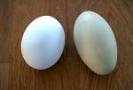 ägg och ägg